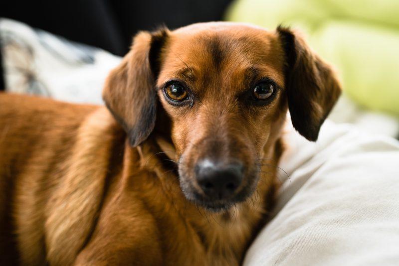 Day in the life bij gezin in Haren, tekkel, bruine hond