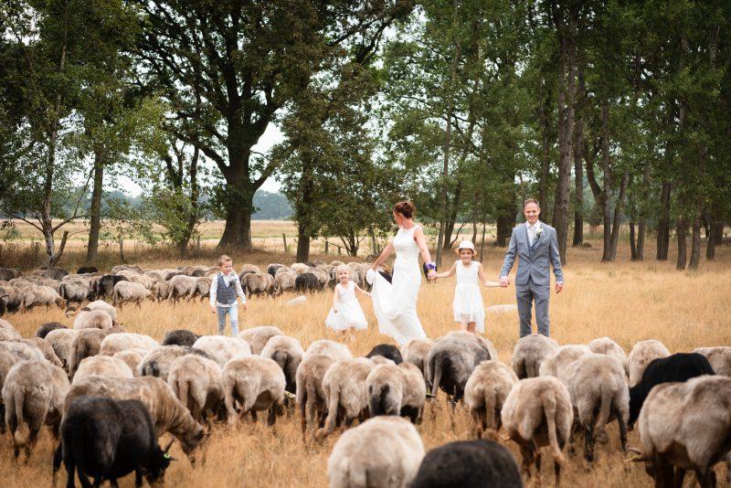 bruidsfotografie Assen, Balloërveld, jantina fotografie, natuurlijk licht fotograaf, trouwen, witte jurk, op de heide, bomen, gezinsfotografie, kinderen bij trouwen, schaapskooi, Drenthe